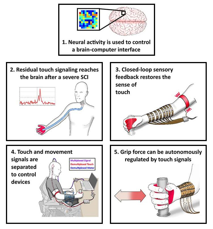 The block at the top shows an outline of a brain with the location of the neural implant magnified. The block number 2 show a drawing of a human torso and head with a connection in blue between the hand and the head. Block three shows an illustration of a forearm with the electrical stimulation sleeve and a separate band around the upper arm that provides haptic feedback.  The illustration in block 4 indicates that there are separate signals for touch and movement that are multiplexed to the implant.