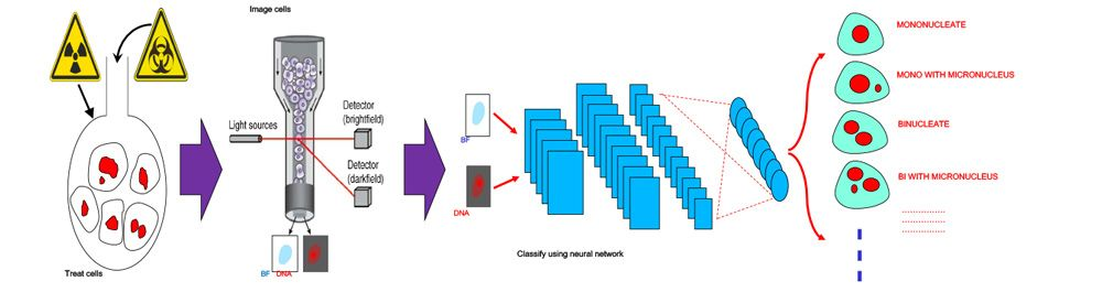 Figure 2. Automated image classification workflow.