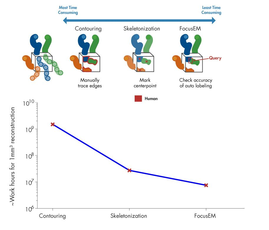 Figure 4. Work hours required for different approaches to densely reconstruct a cubic millimeter of nerve tissue. While manual approaches are time-consuming and expensive, FocusEM allows dense reconstruction of larger brain volumes within realistic time frames and costs.