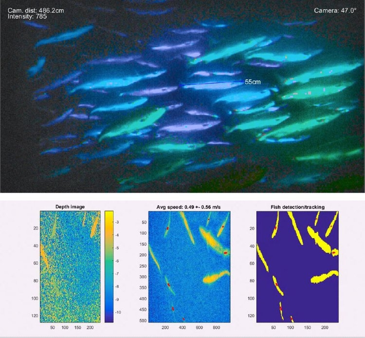 Figure 9. Top: Image overlaid with length measurement. Bottom: images used to track individual fish.