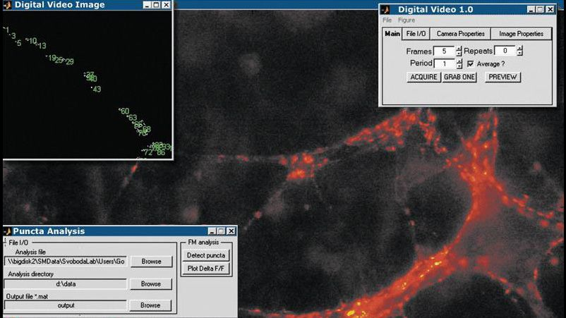Image Acquisition Toolbox application that acquires and analyzes images of central synapses to monitor synaptic transmission over time.