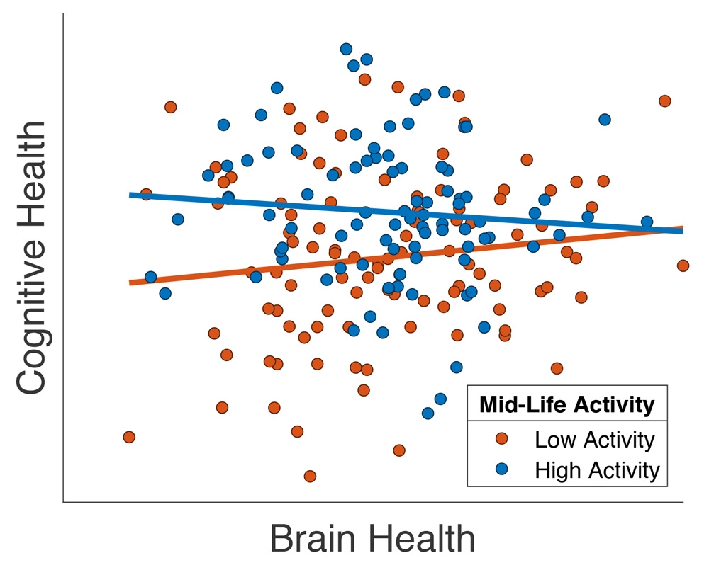 """Plot showing the relationship between cognitive ability and a structural MRI measure of brain health (""""total gray-matter volume"""") in a subset of Cam-CAN participants over 65 years of age, adapted from Chan et al. (2018). Each participant is a dot, with the color of the dot indicating whether they had taken part in high (blue) or low (red) levels of activity outside the workplace in middle age."""