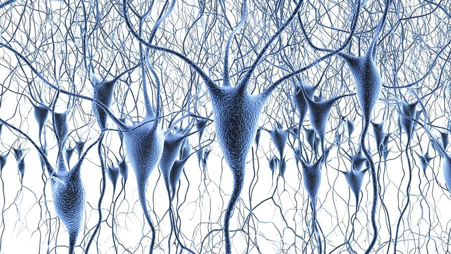 Cellular and Systems Neuroscience